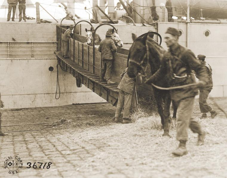Horses debark from a transport ship at Bordeaux. Almost 68,000 horses and mules were shipped from the United States to the AEF.